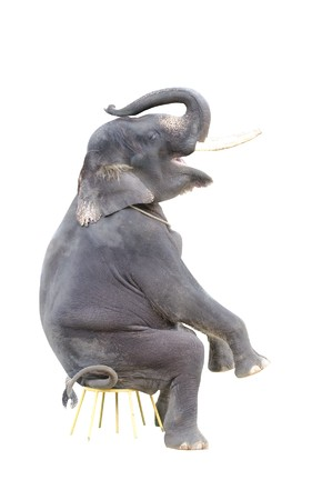 isolated elephant on a sitting position