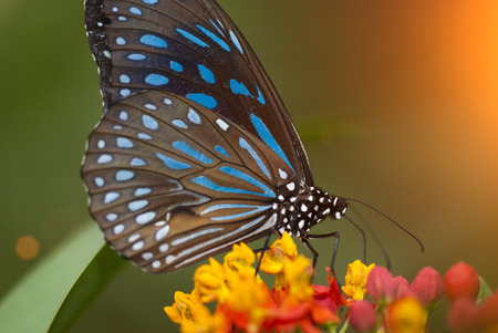 Photo pour butterfly  early in the morning - image libre de droit