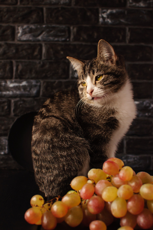 Green eyes, pink nose and long mustache - 