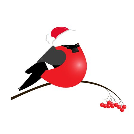 Illustration pour bullfinch isolated on white background. Sample of poster, party holiday invitation, festive banner, card. Vector cartoon llustration. - image libre de droit