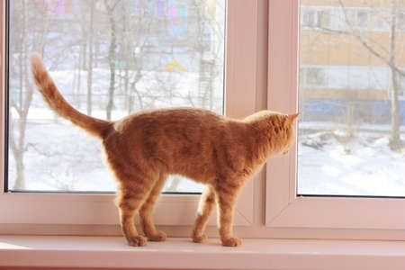 Red cat is walking on the windowsill and looking out the window. There is snow outside the window.