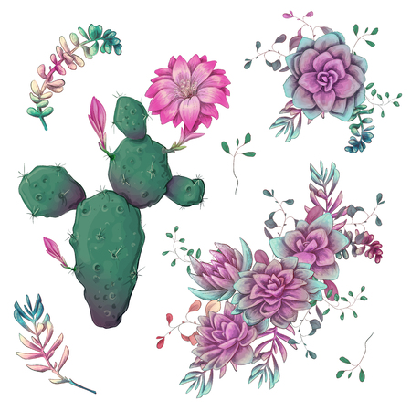 Illustration pour Succulents. Cacti hand drawn on a white background. Flowers in the desert. Vector drawing succulents. - image libre de droit