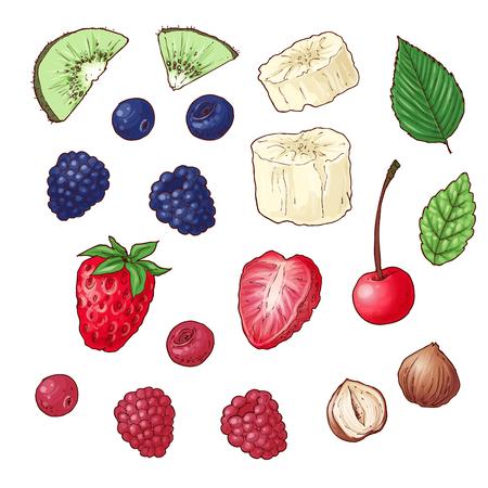 Illustration pour Set of wild berries kiwi banana nuts. Vector illustration - image libre de droit