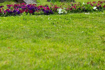 Foto de Summer green lawn with flowers, urban landscape - Imagen libre de derechos
