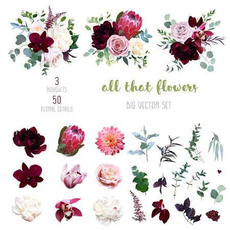 Illustration pour Dusty pink and creamy rose, coral dahlia, burgundy and white peony flowers, cymbidium orchid, pink camellia, eucalyptus, greenery, berry, marsala astilbe big vector collection. Isolated and editable - image libre de droit