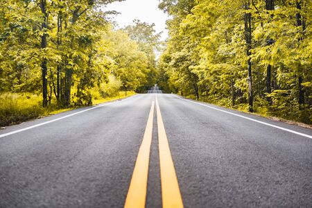 Photo pour asphalt road with yellow diving line and forest background - image libre de droit