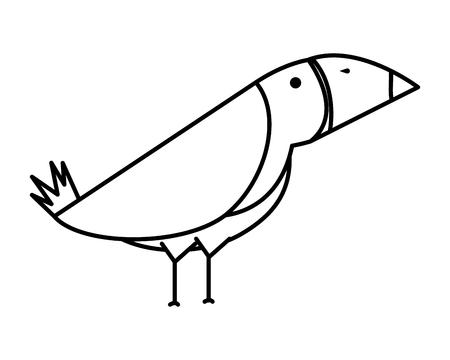 toucan bird exotic animal vector illustration design