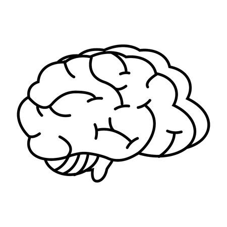 Illustration pour human brain organ on white background vector illustration - image libre de droit