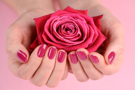 Photo pour Hands holding a rosebud. Solid dark pink finish on nails. Fresh style and hands care. - image libre de droit
