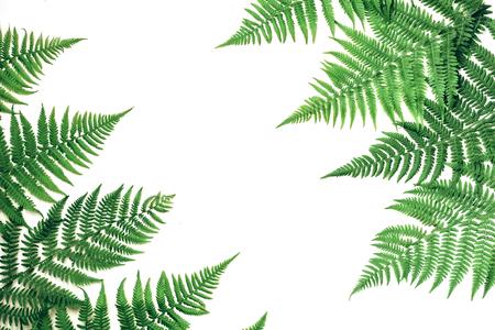 Photo pour Summer composition. Tropical fern leaves on white background. Summer concept. Flat lay, top view, copy space - image libre de droit