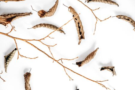 Photo for Autumn composition. Dried leaves and wooden branch on white background. Autumn and thanksgiving day concept. Flat lay, top view, copy space - Royalty Free Image
