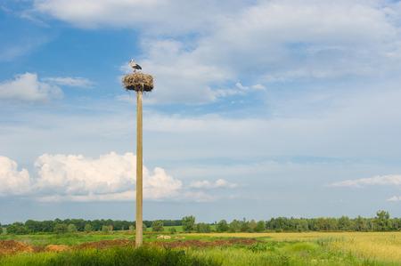 Ukrainian landscape with stork hermit nest against blue evening sky