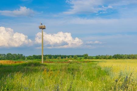 Ukrainian landscape with stork hermit nest on a lonely pole against blue evening sky