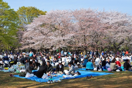 TOKYO - APRIL 5 : traditionally every year many people come to celebrate cherry blossom season at famous Yoyogi park  April 5, 2008 in Tokyo, Japan