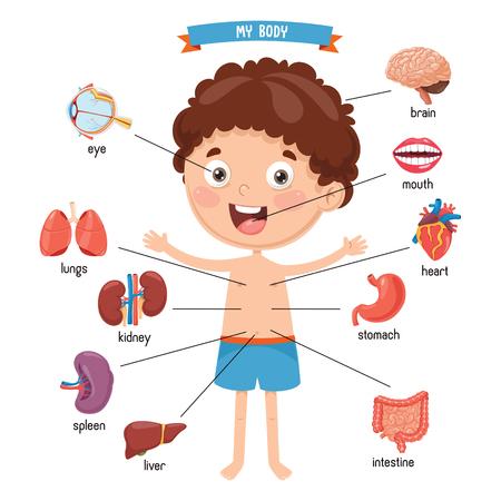 Ilustración de Vector Illustration Of Human Body - Imagen libre de derechos