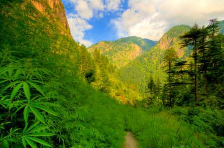 Photo pour Parvati Valley, North India - image libre de droit