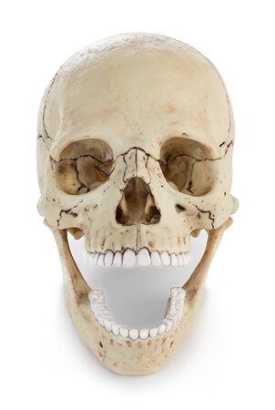 Photo pour Human skull isolated on white - image libre de droit