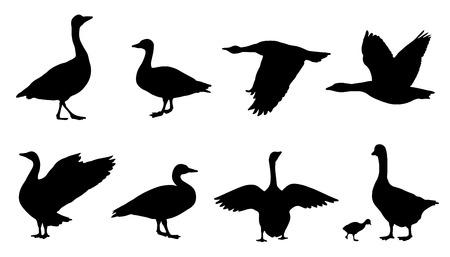 Ilustración de goose silhouettes on the white background - Imagen libre de derechos