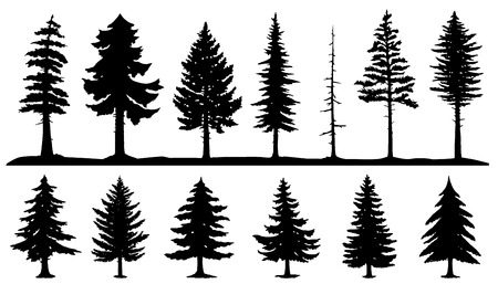 conifer tree silhouettes on the white background