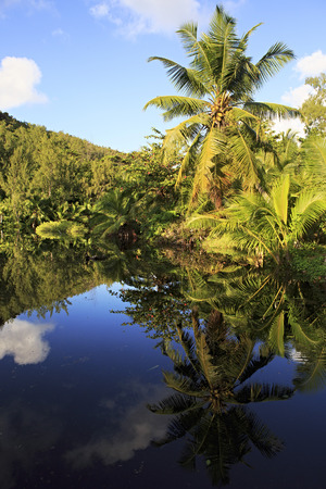 Beautiful lake with palm trees near the Le Chevalier Bay Guesthouse. Praslin Island in the Seychelles.