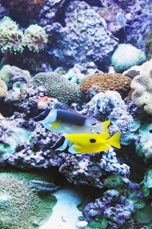 Yellow Fish Aquarium