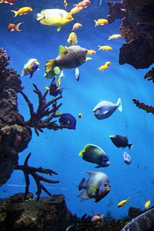 Reef Mural Wallpaper