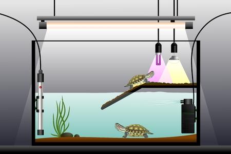 Aquaterrarium. Schematic representation of the terrarium. Terrarium equipment. Vector illustration.