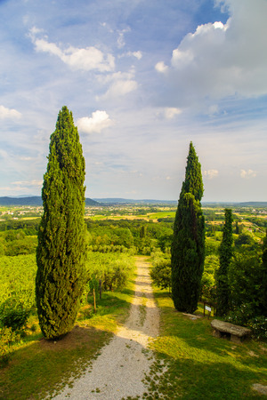 Photo pour The beautiful vineyard of Collio, Friuli Venezia-Giulia, Italy - image libre de droit