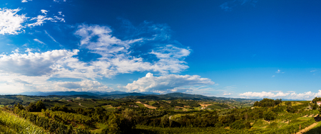 Photo pour The italian vineyards at the border with Slovenia in a summer afternoon - image libre de droit