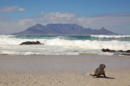 Table Mountain and Seal