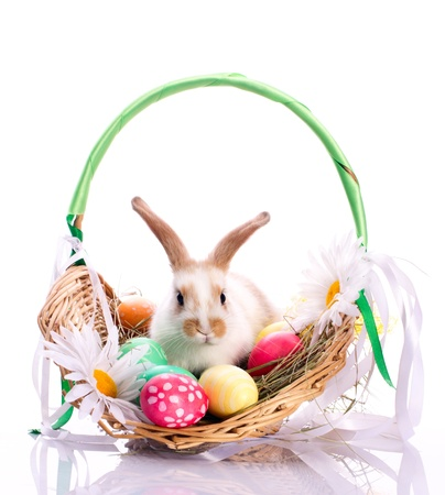 Cute bunny in basket and easter eggs isolated on white