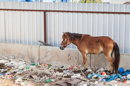 A horse in Thailand stands in the waste and its own excrement.
