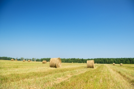 Bales of hay in a large fiel