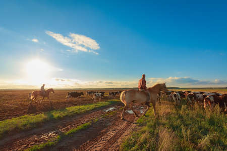 Photo pour On horseback shepherds graze cows - image libre de droit