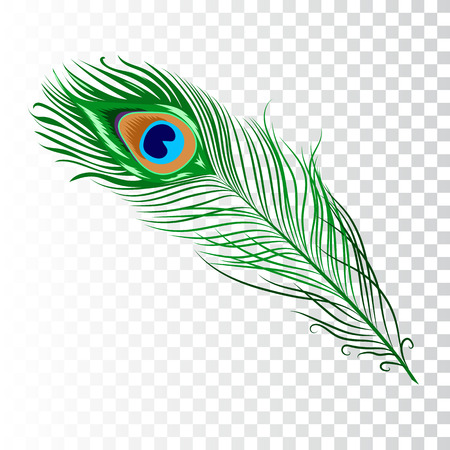 Ilustración de Peacock feather. Vector illustration on white background. Isolated image. - Imagen libre de derechos