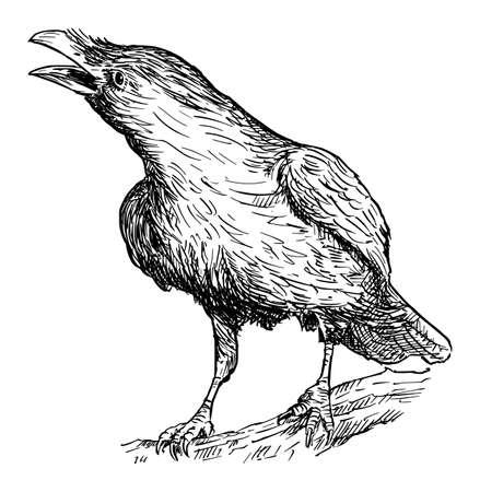 Illustration pour Black Common Raven Bird. Vector Drawing or Illustration - image libre de droit