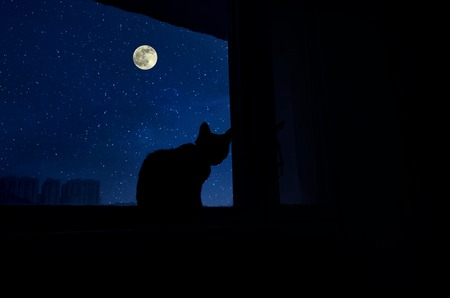 Photo pour Cat sit by the windowsill in moonlight and looking at full moon. Dark room in the silhouette of a cat sitting on a window at night - image libre de droit