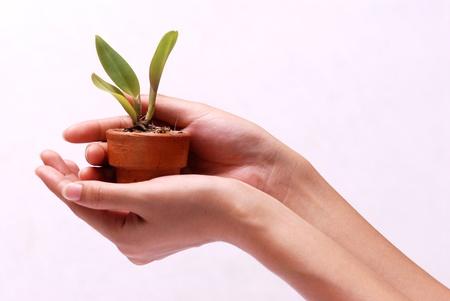 Photo pour Hands holding young plant in clay pot  - image libre de droit