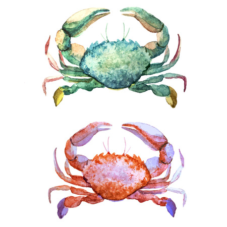 Illustration pour Beautiful watercolor vector pattern with corals shells and crabs - image libre de droit