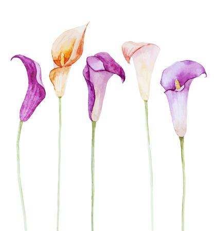 Illustration pour Beautiful vector image with nice watercolor calla flowers - image libre de droit