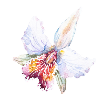 Beautiful raster image with nice hand drawn watercolor lilies