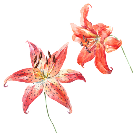 Illustration pour Beautiful vector image with nice hand drawn watercolor lilies - image libre de droit