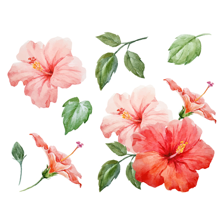 Watercolor Vector Tropical Hibiscus Flower Royalty Free Vector Graphics