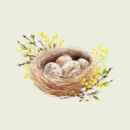 Watercolor bird nest with eggs Vector illustration.