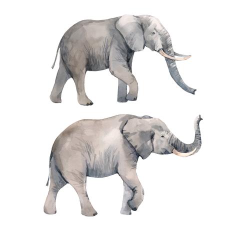 Ilustración de Watercolor elephant vector illustration - Imagen libre de derechos