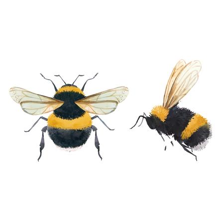 Ilustración de Beautiful vector illustrations with watercolor bumblebee bee wasp insect - Imagen libre de derechos