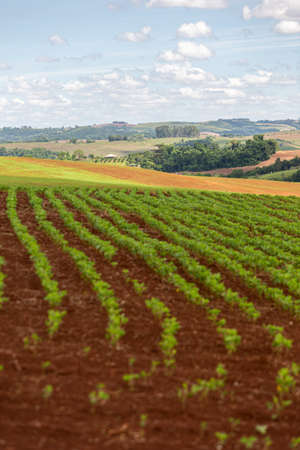 Photo pour Rows of young soy plants in a field and mountains on a blurred background on a sunny weather - image libre de droit