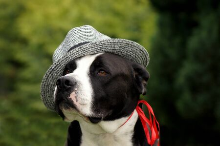 Dog with sun hat on the green meadow