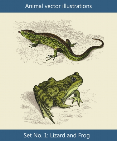 Animal vector illustrations ,  Lizard and Frog