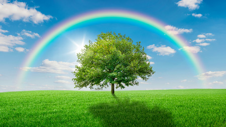 Photo pour Oak tree on a green meadow covered by a rainbow - image libre de droit